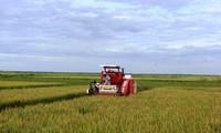 รูปแบบทุ่งนาขนาดใหญ่ในจังหวัดกว๋างบิ่งสร้างประสิทธิภาพในการผลิตการเกษตร