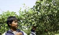 """""""กลุ่มเกษตรกรที่มีความชอบเหมือนกัน""""ในจังหวัดนิงถวนช่วยกันพัฒนาเศรษฐกิจ"""