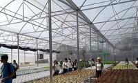 รูปแบบการปลูกผักแบบไฮโดรโปนิกส์ของนักธุรกิจหญิงในเขตตะวันตกภาคใต้