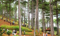 Forestry sector to achieve targets for sustainable development