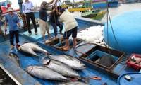 越南努力争取欧盟委员会取消对越南海产的黄牌警告和保障渔业可持续发展