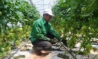 Lam Dong destina fondo millonario para construir una cadena de producción agrícola sostenible