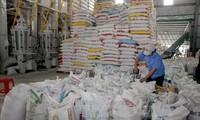 Aumentan exportaciones de arroz de Vietnam a Malasia