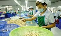 Exportación de anacardo de Vietnam prevé alcanzar 3 mil 700 dólares en 2018