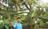 Cao Van Nguyen, agricultor pionero en desarrollar modelo de alternancia de cultivos