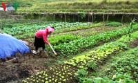 Hoang Thi Can, una mujer emprendedora en Yen Bai