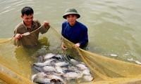 อินเดียมีความปรารถนาเรียนรู้ประสบการณ์เพาะเลี้ยงสัตว์น้ำของเวียดนาม