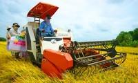 ส่งเสริมการใช้เครื่องจักรกลการเกษตรในการปลูกข้าวในเขตที่ราบลุ่มแม่น้ำโขง