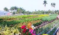 หมู่บ้านดอกไม้ซาแด๊กดึงดูดใจนักท่องเที่ยวในโอกาสเทศกาลตรุษเต๊ต