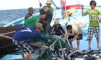 ความร่วมมือด้านสัตว์น้ำเวียดนาม-อินโดนีเซีย