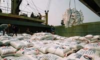 สัญญาณที่น่ายินดีในการส่งออกข้าวของเวียดนาม