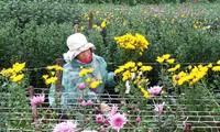 หมู่บ้านปลูกดอกไม้ฝู่เวินพัฒนาอาชีพปลูกดอกไม้ควบคู่กับการพัฒนาการท่องเที่ยว
