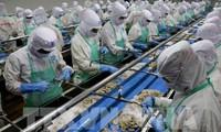 อียูชื่นชมคำมั่นในการจับปลาและการทำประมงของสำนักงานที่เกี่ยวข้องของเวียดนาม