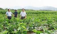 เกษตรกรมีรายได้สูงเนื่องจากการปลูกหม่อนเลี้ยงไหม