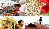 สินค้าอุตสาหกรรมและเกษตรของเวียดนามที่ส่งออกไปยังประเทศจีนค่อยๆเพิ่มขึ้น