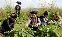 Ha Giang province urged to improve life of ethnic minority