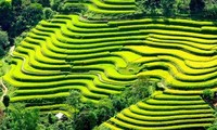 Ethnic culture highlighted at Mu Cang Chai festival