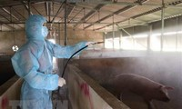 Vietnam capable of producing vaccine against African swine fever
