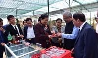"""Vietnam, UN enjoy """"very good"""" relationship: UN resident coordinator"""