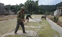 Genossenschaftsmodell für Modernisierung der ländlichen Räume in Son La
