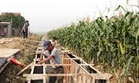 Kreis Hiep Hoa: Neugestaltung der ländlichen Räume mit der Einwilligung der Bewohner