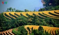 Beginn der Tourismus- und Kulturwoche der Reisterrassen im Kreis Hoang Su Phi