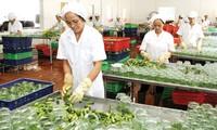 Export der vietnamesischen Landwirtschaftsprodukte bei der Teilnahme an TPP und AEC