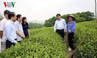 Vizepremierminister Vuong Dinh Hue tagt mit Behörde der Provinz Tuyen Quang