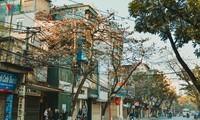 Besondere Attraktionen der Stadt Hanoi bei Touristen