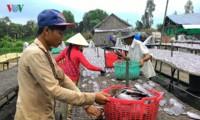 Dorf zur Herstellung von getrockneten Schaufelfadenfisch