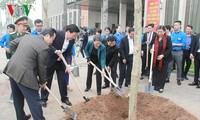 Provinz Dien Bien schenkt dem Parlament Bauhinienbäume