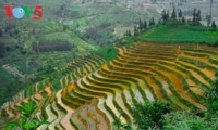 Reisterrassen Ha Giang in der Zeit der Wasserfelder