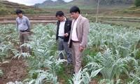 Kreis Quan Ba in der Provinz Ha Giang pflanzt Kräuter zur Verbesserung des Lebens