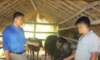 Kreis Quang Binh in der Provinz Ha Giang verwendet effizient Kredite zur landwirtschaftlichen Entwicklung