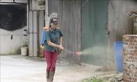 Internationale Organisationen helfen Vietnam bei der Vorbeugung gegen die Afrikanische Schweinepest