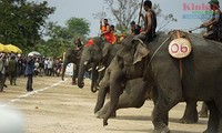 Elephant race draws huge crowds to Central Highlands district
