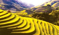 Mu Cang Chai terrace fields among world's most colorful places