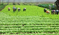 Increasing agricultural competitiveness for international integration