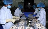 越南工贸部公布310家有信誉出口企业名录