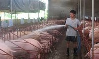 朔庄省猪肉价格连续上涨