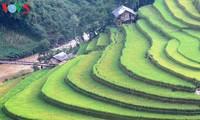 安沛省为2017年穆庚寨梯田旅游文化周做好了准备