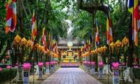 佛诞节庆典在越南中部各省举行