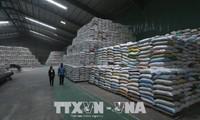 埃及将进口100万吨越南大米