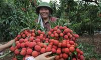 加强农民联动发展