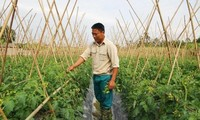 嘉莱省第一座从事高技术农业的巴那族村庄。