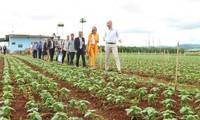 越南与荷兰可持续农业与粮食安全会谈