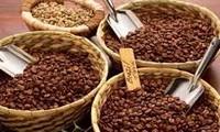 Nachhaltige Entwicklung des Kaffee-Anbaus