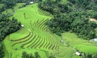 Einzigartige Kultur- und Tourismustage mit dem Terassenreisanbau in Hoang Su Phi