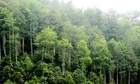Bauern in Yen Bai verbessern ihr Einkommen durch den Waldbau