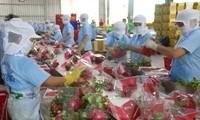 Vietnam envía primer lote de pitahaya a Australia